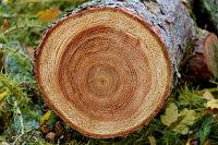 复古治愈的树木年轮微距摄影图片