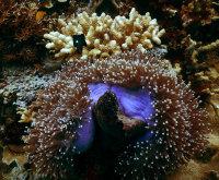 茂密飘逸的海底珊瑚高清壁纸大全
