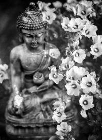 慈悲肃穆的佛像精美图集