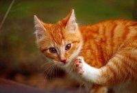 调皮可爱的猫咪桌面壁纸