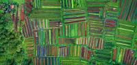 整齐排列的农田航拍精美图集
