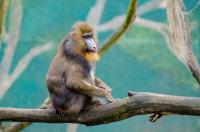 动物园中毛茸茸的可爱狒狒壁纸图集