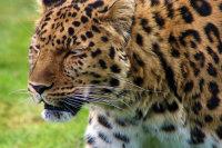 大自然中的野生猎豹高清桌面壁纸