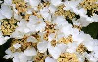 色彩缤纷的娇嫩绣球花高清桌面壁纸