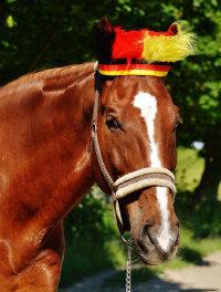跑马场上装扮奇特的骏马精美图集
