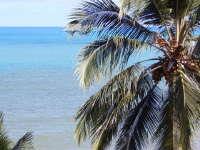 矗立在海滩的高大椰子树桌面壁纸