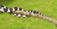 在草丛中游行迅捷敏锐的蛇高清图集