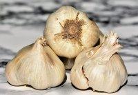 烹饪中必不可少的大蒜精美摄影图集