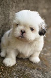 刚出生的可爱小奶狗高清壁纸
