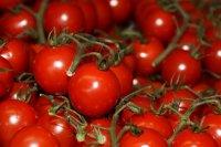 酸甜可口的番茄素材图片