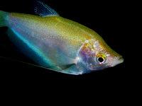 海底悠闲自在色彩斑斓的热带鱼电脑壁纸