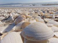 躺在湿润沙滩上形状各异的贝壳电脑壁纸