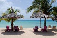 海滩上枝叶茂盛高大挺拔的棕榈树桌面壁纸
