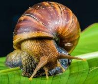 在花叶和岩石上缓缓爬行的蜗牛高清桌面壁纸