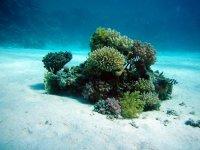 神秘的海底颜色艳丽的珊瑚高清桌面壁纸