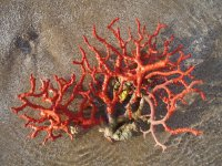色彩斑斓的热带鱼在珊瑚礁玩耍电脑壁纸