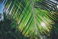 海滩边生长茂盛的棕榈树桌面壁纸