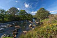 碧蓝天空下的林间溪流高清桌面壁纸