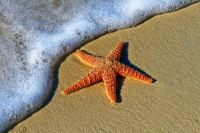 躺在湿润浅滩上晒太阳的海星高清壁纸