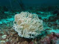 随着水波荡漾的珊瑚礁精选壁纸