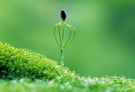 早安心语170129:生活再不如人意,都要学会自我温暖和慰藉