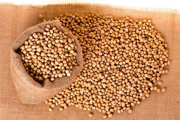 中国转基因大豆研究获得突破 南方也能种大豆了