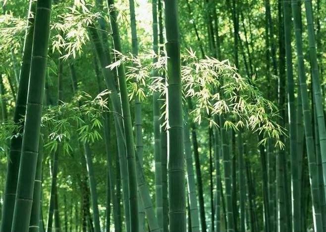 """是时候给""""一次性筷子""""正名了"""