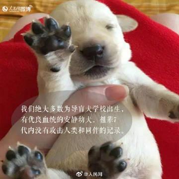 你愿和导盲犬同行吗?