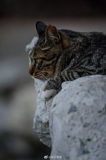 萌宠图片拍人物拍的是表情,拍猫也是如此。-萌宠