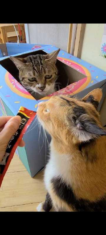看到猫同伴在吃猫条后,这猫的表情亮了