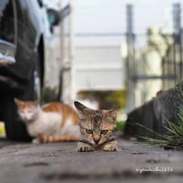 ins上一位日本专门拍猫猫的摄影师...