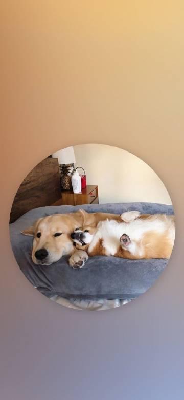 萌宠图片萌系小狗勾和它的朋友们的合照,✌!-萌宠