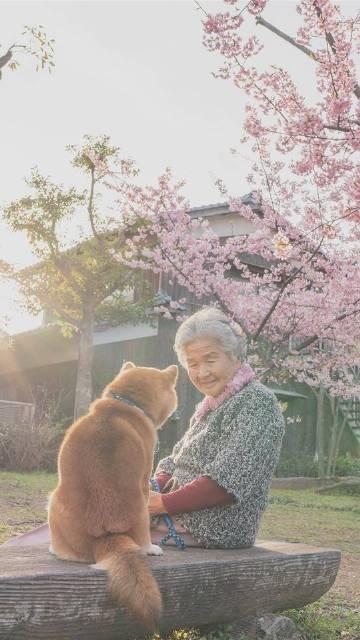 萌宠图片日本摄影师傅TASUTO给他奶奶和家里...-萌宠