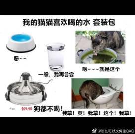 萌宠图片via:刘多梗-萌宠