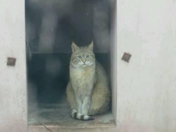 萌宠图片啊西野之前养过荒漠猫-萌宠