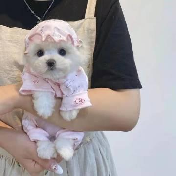 还以为这小狗是毛绒玩具