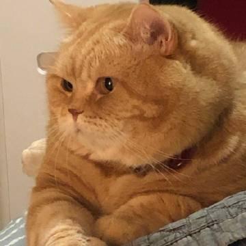 《大 胖 橘》 #萌宠部落格#