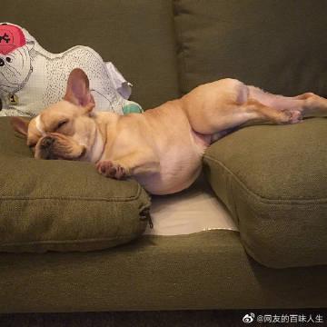 萌宠图片一位饲主热衷于拍摄自家狗子的各种睡照...-萌宠
