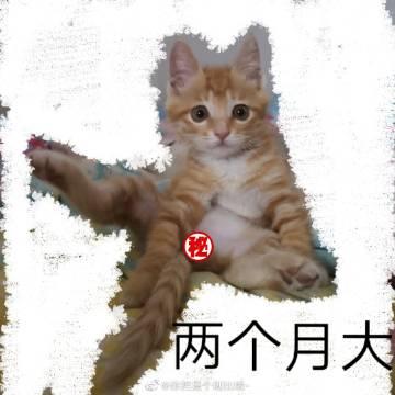 萌宠图片家人们 我搞不明白了 咱就说我这个猫...-萌宠