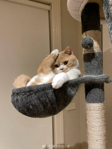 就是可爱!云养猫