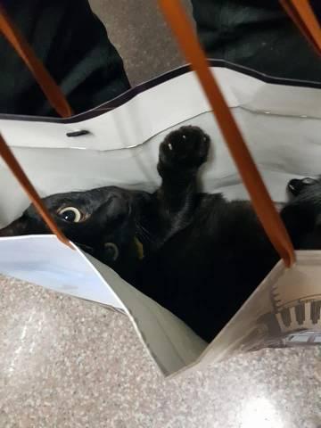 爸爸准备出国旅游,他怕不在这段时间猫会瘦...
