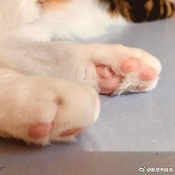 萌宠图片猫爪垫垫眼影-萌宠