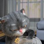 猫咪想要抓金鱼动画gif动态图片