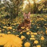豹纹猫Suki户外美景摄影图片