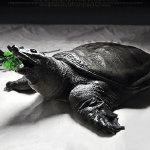 木棍挑逗伸着脖子咬人的乌龟gif动态图片