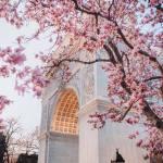 纽约春天百花齐放图片