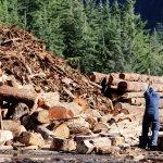 伐木工人人体艺术摄影
